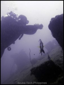 Scuba Diving in Subic Bay