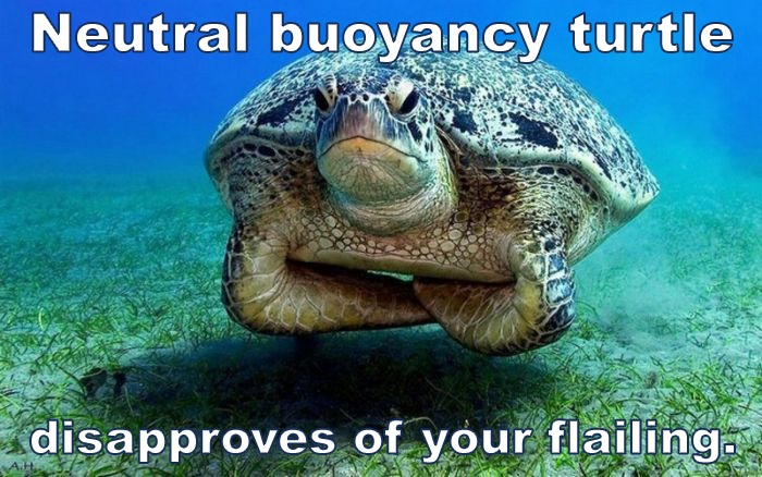 neutral buoyancy turtle trim scuba diving skills